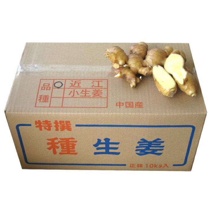 【種生姜】中国産 近江生姜(黄)10kg