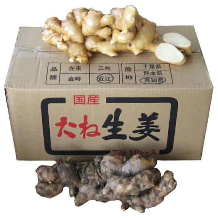 【種生姜】高知県産 近江生姜(白)10kg