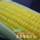 長野県産 とうもろこし(恵味グレイス)L〜2L 10本入