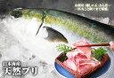 送料無料【スピード出荷】【日本海産】寒ブリ(天然ブリ)[生] 1匹(5kg程度)【お刺身・照り焼き♪】