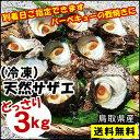 【冷凍】送料無料天然サザエ鳥取県産[冷凍] 3kg(中小サイズ)【お刺身・壺焼きに♪】