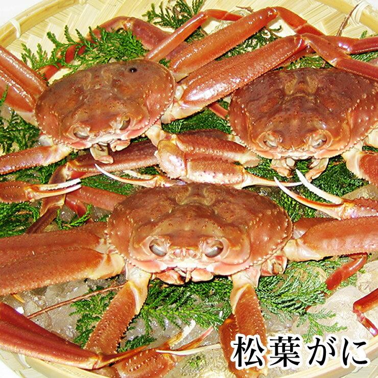 【予約販売】松葉がに[生][足折れ混じり] 約1.5キロセット(3-5枚程度入)【送料無料】蟹の本場!鳥取県岩美町 松葉ガニ まつば 蟹 カニ かに 松葉 ガニ