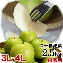 二十世紀梨 【自家用】2.5kgセット【大玉3L-4L】(6-7玉入)【送料無料】【鳥取県産】(20世紀梨)[常温]梨 なし 和梨【…