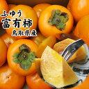 訳あり富有柿(ふゆうかき)5kgセット〔送料無料〕[鳥取県産][常温]収穫があり次第出荷