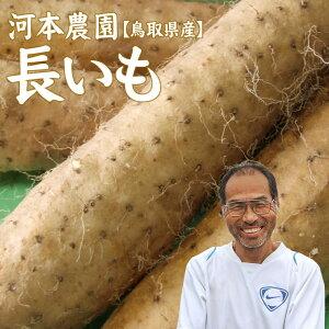 【予約】【河本農園】長いも(2-3本入)約3kg送料無料鳥取県[常温]長芋 ギフト【2月中旬以降収穫があり次第出荷予定】