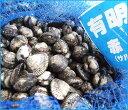 【スピード出荷】【有明海産】赤貝(サルボウ)[生] 500g(50個前後入り)アカガイ