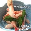(礼品用:脚捆绑)巴里纱胭脂红雪蟹[在脚去混杂时][煮,完成]1(500g左右)