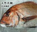 送料無料【スピード出荷】天然真鯛[生]大 1匹(3kg程度)鳥取県産【お刺身・塩焼き♪】