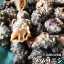【スピード出荷】鳥取県産タバコニシ[生] 500gセット(30-60個程度入)【塩茹で・味噌汁♪】
