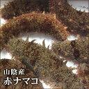 【スピード出荷】【鳥取県産】(なまこ)赤ナマコ海鼠[活生] 500g詰め込みセット(1-4匹程度入り)【酢の物に♪】