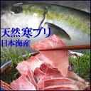 送料無料【スピード出荷】【日本海産】天然寒ブリ[生] 1匹(3kg前後)【お刺身♪ブリ大根♪】