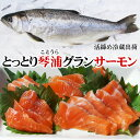 【送料無料】とっとり琴浦グランサーモン(養殖銀鮭・ギンザケ)1匹(600-700g程度)[活締め]冷蔵便(鳥取県産)