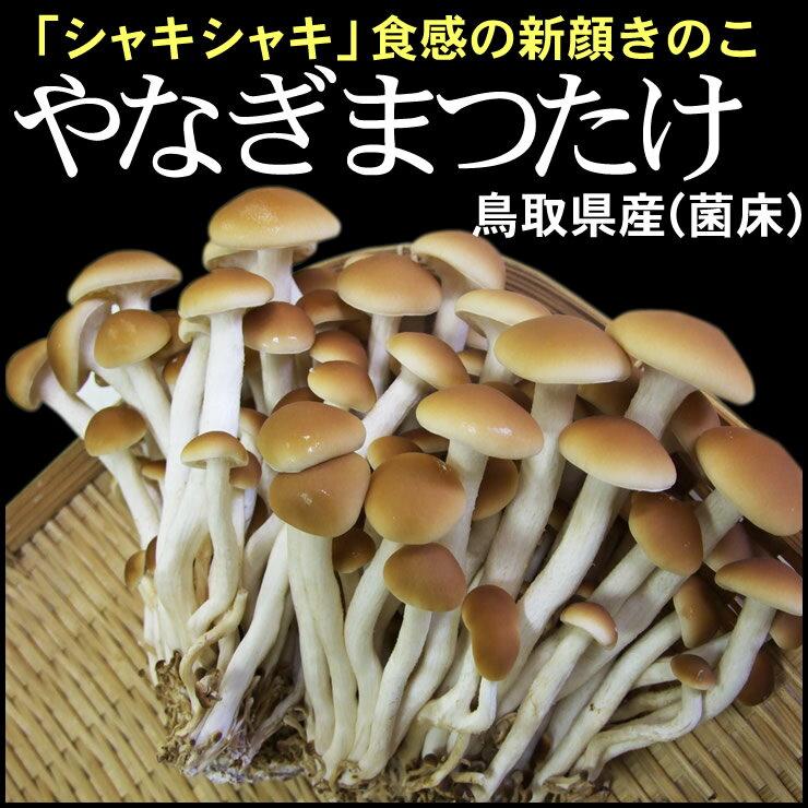 鳥取県産「やなぎまつたけ」120g×6パック [冷蔵便]【送料無料】ヤナギマツタケ