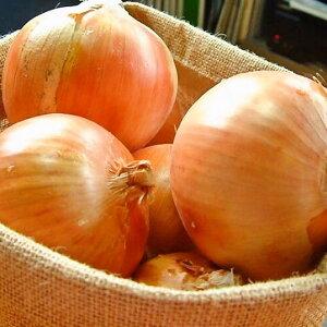 玉ねぎ 玉ネギ 北海道 5kg 甘くて旨味最高!北海道の有機玉ねぎ 約5kg有機JAS認証 北海道 無農薬 甘くてうまい 料理の味がアップする