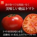 ギフトに大人気!高糖度のフルーツトマト!誰が食べても旨いと驚く「珊瑚樹トマト」6/15(水)で終了!