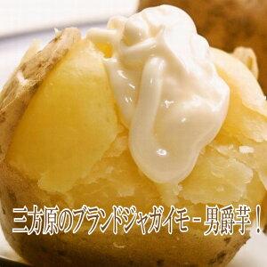たちばなファーム 三方ヶ原の男爵イモ 5kg(M中心)男爵の後はきたあかり 新じゃがいも 静岡県 肌のきれいなジャガイモ 男爵いも 浜松 野菜 お取り寄せ ご当地