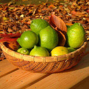 国産レモン ライム ノーワックス 岩武果樹園の国産グリーンレモン3kg(25〜30個) 皮まで食べられて安心 和歌山 農家直送