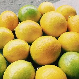 国産レモン岩武果樹園の国産レモン3kg(25〜30個)ノーワックス 皮まで食べられて安心 和歌山 農家直送