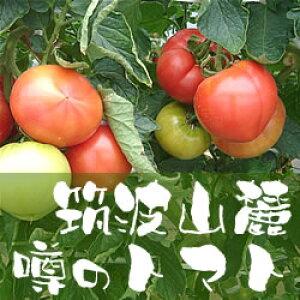 トマト たっぷりケース