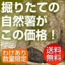 自然薯(じねんじょ) 訳あり800g前後【送料無料!!】