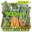 特選 野菜セット「小家族」【送料無料!】