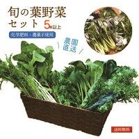 無農薬葉野菜詰め合わせセット【葉野菜とミニ根菜のセット】有機JAS規格で栽培化学肥料・農薬不使用ほうれん草こまつな水菜わさび菜無農薬野菜