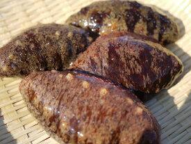 【送料無料】伊勢湾産 活赤ナマコ・赤なまこ(海鼠・海参・このわた) 1kg 5匹以上 まると水産