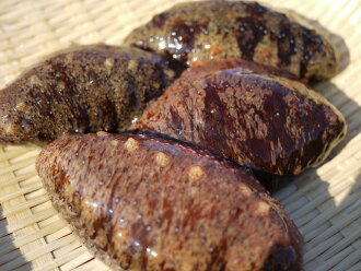 More than 伊勢湾産活赤 sea cucumber, 1 kg of red sea cucumber (sea cucumber, dried sea cucumber, このわた) five