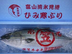 【送料無料】【ひみ寒ぶり宣言】【富山湾 冬の王様】天然・氷見の寒ブリ(ひみ寒ぶり) 8kg以上