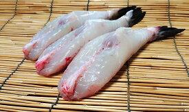 【送料無料】愛知県 まると水産より 冷凍・天然とらふぐ【トラフグ 虎河豚 てんねん】身欠 500g【から揚げ・鍋・刺身用】