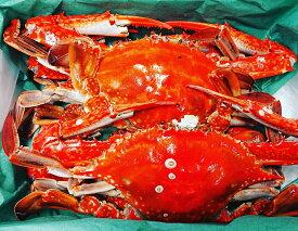 【送料無料】 伊勢湾産 天然 ボイル 渡り蟹 ワタリガニ ガザミ (オス)(冷凍)1kg 4〜6匹前後 爪折れ