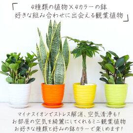 植物,観葉植物,鉢植え,インテリア,ペペロミア,サンセベリア,パキラ