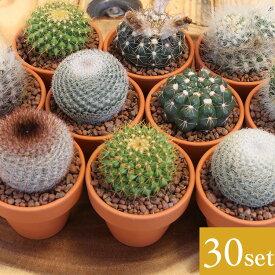 【プレミアム】【送料無料】ミニサボテン 2号鉢 アソート 30個セット さぼてん インテリア 観葉植物 多肉植物 プレゼント 植木鉢