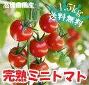 【最盛期セール★特別価格】高橋農園のこだわりミニトマト 1.5kg【特別栽培・減農薬・減化学肥料】(CF小鈴)バラ売り…