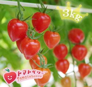 【送料無料】完熟トマトベリー(高糖度ミニトマト)【特別栽培・減農薬・減化学肥料】3kgプレミアム ミニトマトバラ売り3kg
