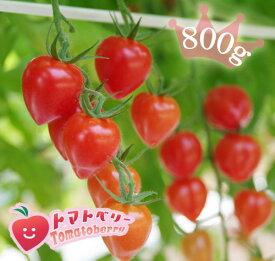 【送料無料】完熟トマトベリー(高糖度ミニトマト)【特別栽培・減農薬・減化学肥料】800gプレミアム ミニトマトバラ売り800g