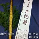 自然薯 約600g とろろ芋 秀品 贈答用 和歌山県産 紀州産 米本さんのこだわり自然薯 減農薬 減化学肥料 国産 山芋 ヤマ…