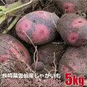 産地直送品 グラウンドペチカ ジャガイモ 5kg 春じゃがいも 新じゃが 長崎県産 雲仙 九州 無農薬 無除草剤 無化学肥料…