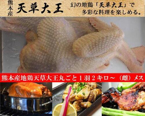 熊本産地鶏天草大王丸ごと1羽2キロ〜(雌)
