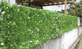 目隠しグリーンフェンス1×3m【緑のカーテン グリーンカーテン 日よけ 日除け シェード 日よけ シェード サンシェード ベランダ 日よけスクリーン よしず 目隠しフェンス】(倉出し)