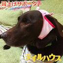 たれ耳 外耳炎 犬 たれ耳犬 犬の健康 耳の病気 耳のケア 通気性 ジメジメ じめじめ マラセチア菌 耳上げ …