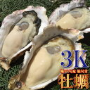 瀬戸内産 殻付き牡蠣3kg前後 約36〜44個 加熱用 牡蠣 鍋 お試し 海鮮 魚介 BBQ かき カキ 牡蠣鍋 カキフライ 牡蠣フラ…