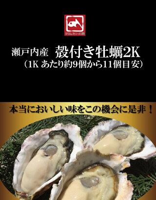兵庫播磨灘産播磨カキ2kg前後送料無料※生食用かき/カキ/牡蠣/鍋/お試し/海鮮/魚介/BBQ高木水産たいの鯛