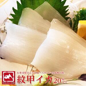甲イカ 20枚 イカ 寿司 刺身 新鮮 口の中に広がる 甘味 旨味 鮮度抜群 実店舗 たいの鯛 播磨 海鮮 いか