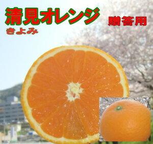 清見オレンジ 約5kg 愛媛産 送料無料 北海道・沖縄 送料別途 贈り物用