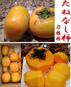 たねなし柿 刀根柿  約5kg 約20個〜30個 わけあり 訳あり 送料無料 北海道。沖縄は別途別途