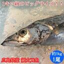 網 太刀魚 約1kg(広島県産)( 網 たちうお タチウオ )傷有り、加熱用、アウトレット