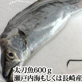 太刀魚 600g( 山口県周防大島産 もしくは 長崎 のブランド 五島太刀 )( 釣り たちうお タチウオ お刺身 )