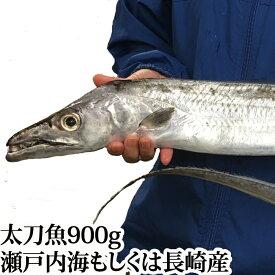 太刀魚 900g ( 山口県周防大島産 もしくは 長崎 のブランド 五島太刀 ) ( 釣り たちうお タチウオ 刺身 生 1尾 特大 ビッグ )