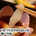 ウマヅラハギ 1尾600g瀬戸内海産 活き締め 刺身用 肝 (4人前)筏(いかだ)漁( うまづらはぎ ハゲ )